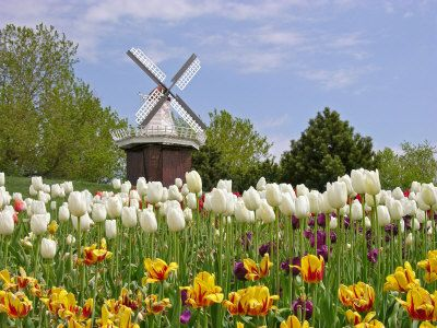 the tulip festival in WA is the 2nd largest in the world and GORGEOUS, but i want to go to the original in the netherlands!!