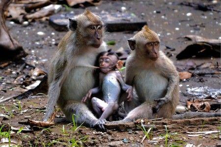 Simon Anon Satria: Nature Expression of Baby Monkey at Alas Purwo National Park, Banyuwangi - East Java, Indonesia.