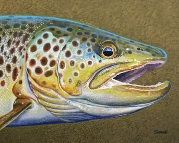 Silver Creek Brown Trout Fish Wall Art http://finefishart.com/silver-creek-brown-trout.html