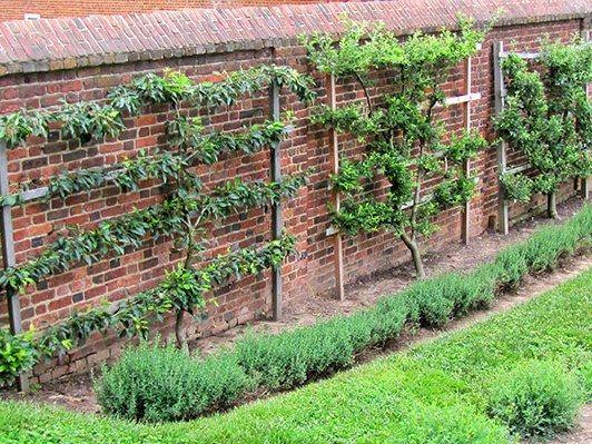 170 best ogród images on Pinterest Garden ideas, Gardening and