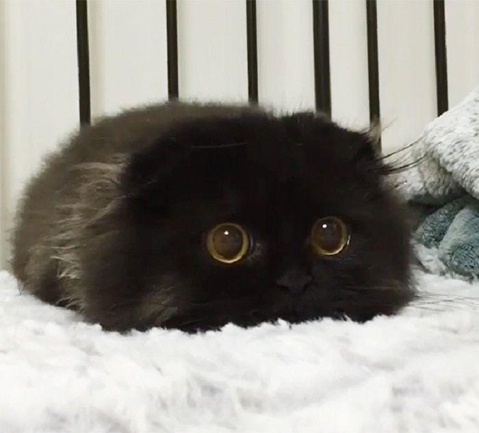 Черный комочек внимательно наблюдает за добычей.