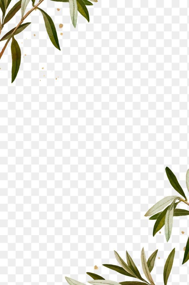 Botanical Frame Png Olive Branches Pattern Free Image By Rawpixel Com Ningzk V Olive Branch Olive Green Wallpaper Photoshop Design