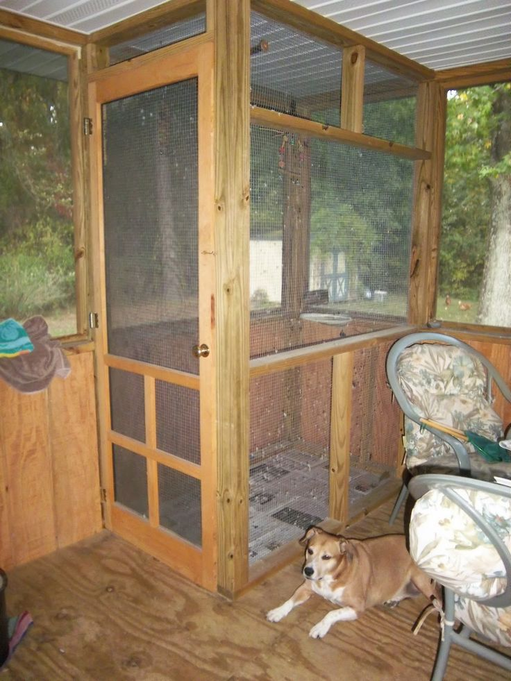 homemade outdoor bird cages when i had my back porch. Black Bedroom Furniture Sets. Home Design Ideas