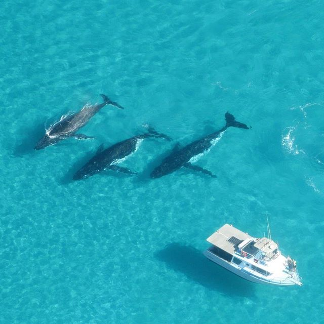Whale watching, Ningaloo Reef, Coral Bay - Australia