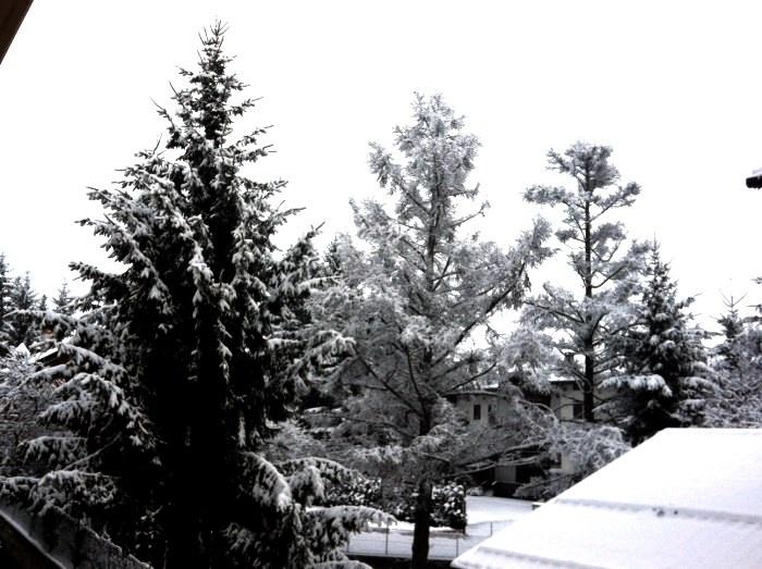 Risveglio sotto la neve...Ecco il panorama fuori dal nostro ufficio...