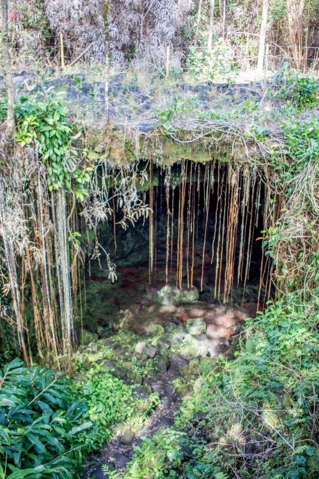 Kaumana Caves Hilo Hawaii Vines