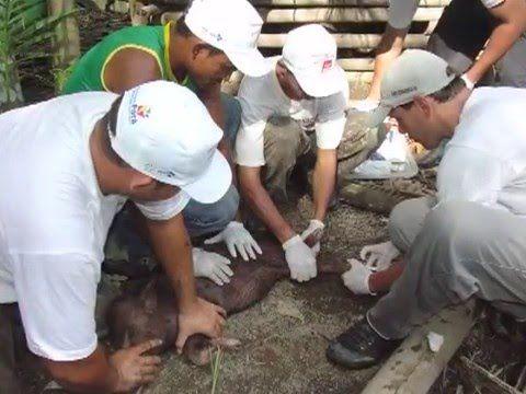 Doença de Chagas - ontem e hoje - YouTube