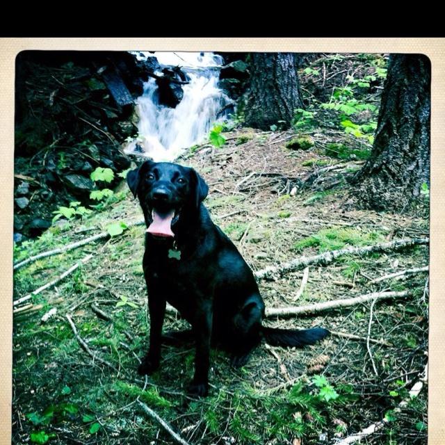 Happy Dog creates a happy heart!: Jesse Dogs, Happy Dogs, Happy Heart, Dogs Create