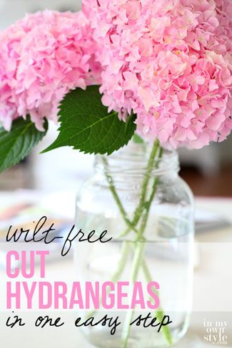 How to cut your hydrangeas so they won't wilt. IT WORKS! Super easy, too.