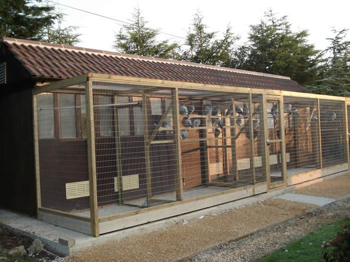143 best pigeon lofts images on pinterest homing pigeons for Pigeon coop ideas