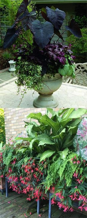 How to create beautiful shade garden pots using easy to grow plants with showy foliage and flowers. And plant lists for all 16 container planting designs!