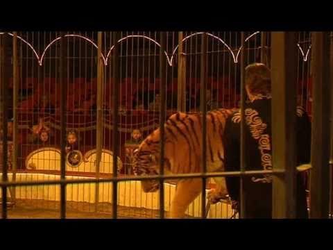 Achter de schermen van Circus Belle Wien