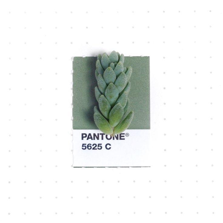 #pantone #green