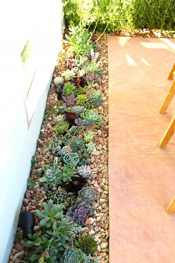 Succulent and herb patio garden. Spice up your patio with a succulent and herb patio garden like this one. It that will add color and life to your average concrete patio. Another great thing about succulents are that they require very little soil to thrive, and the plants actually do well in rocky soil, allowing you to make your patio aesthetically pleasing, water-conservation friendly, as well as green and lively.