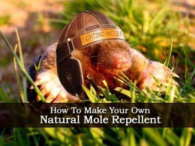Make Natural Mole Repellent