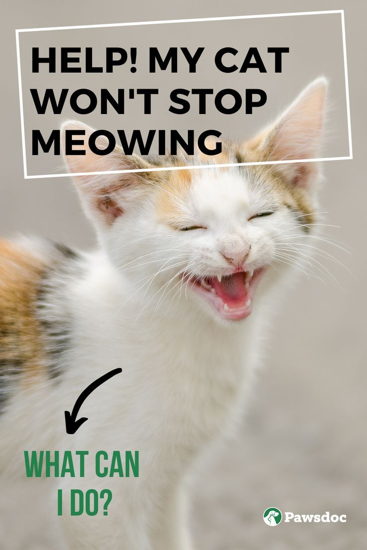 Why Is My Cat Meowing So Much 4 Types Of Cat Meows In 2020 Cat Meowing At Night Types Of Cats Cat Crying