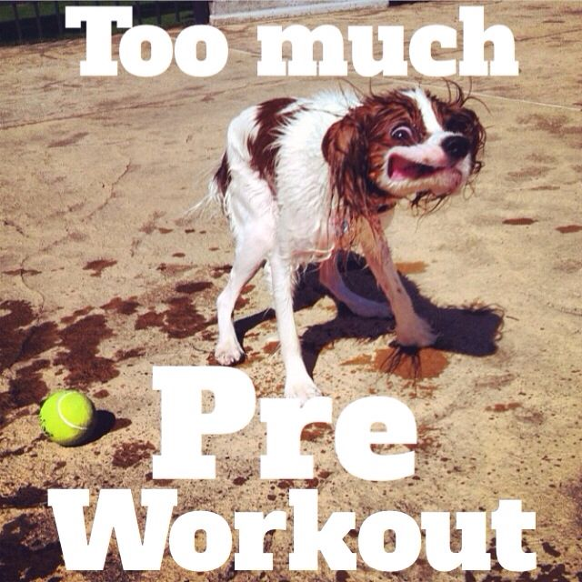 Funny Pre Workout Meme : Too much pre workout giggle pinterest