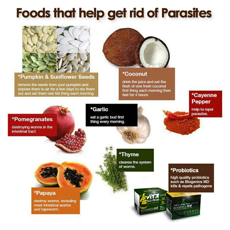 Intestinal Parasites Cause Allergies (Here's How I Rid Mine