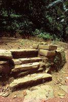 El bosque seco tropical se regeneró por completo en las áreas costeras que habían sido ocupadas por los tayrona antes de la llegada de los españoles.