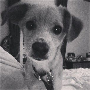 Toulouse - Ariana GrandeGrand 13 9 13, Awesome Animal, Favorite Actor, Ariana Grande, Toulouis Grand, Grand Dogs, Ada Stuff
