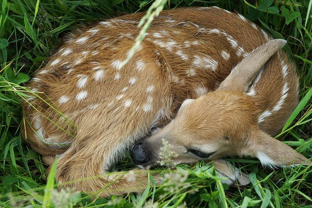 Oh deer, I am tired.