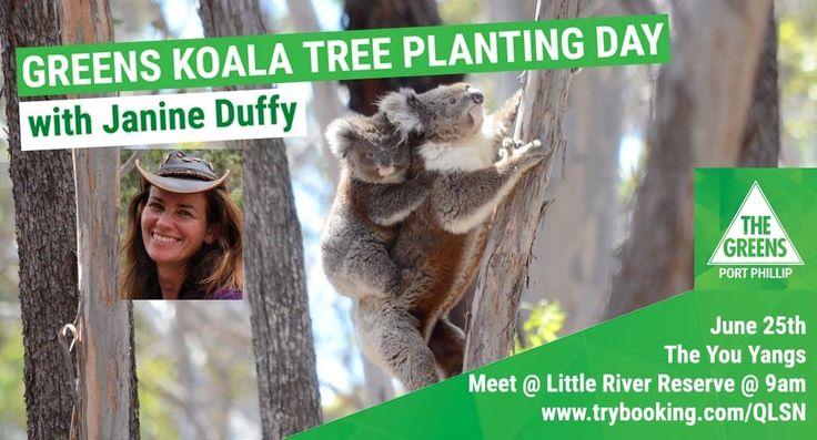 Koala Conservation Days - Koala Clancy Foundation
