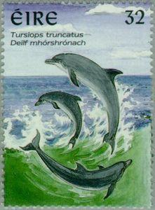 Common Bottlenose Dolphin (Tursiops truncatus)
