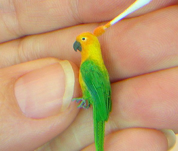 Learn to flock and feather a 1/12 scale parrot with IGMA Fellow Kerri Pajutee  A ton of tutes here