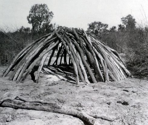 Eucalypt-dome-shaped-shelter-Herbert-Basedow-1890s  Aboriginal Architecture