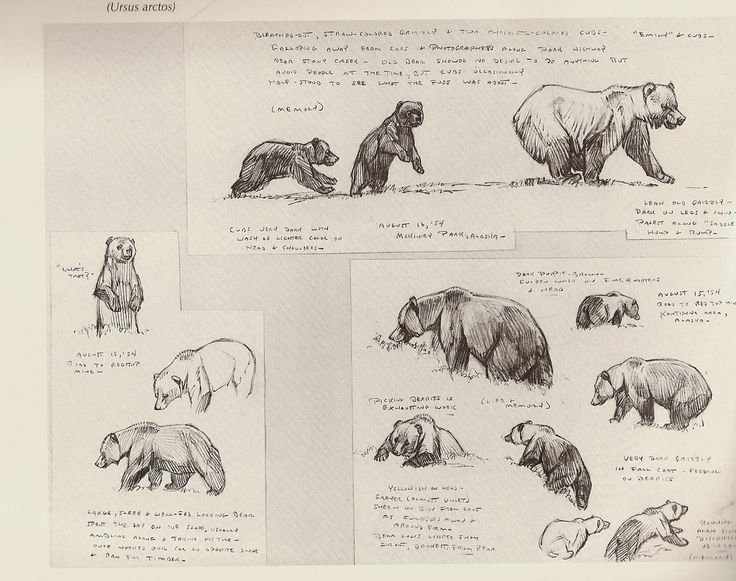 Line Drawings Of African Animals : 10 best african animals images on pinterest animal drawings