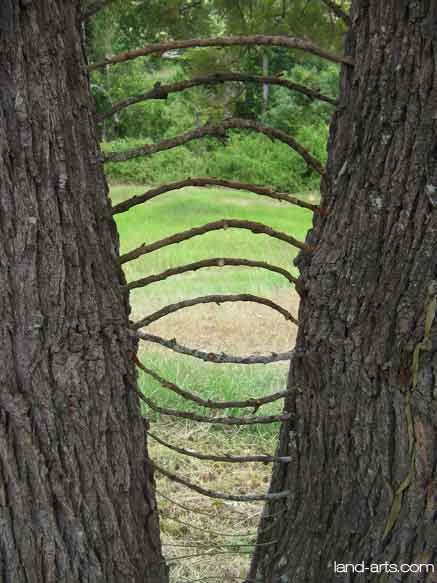 When visiting a park or forest.   A link between trees.                                                                                                                                                                                 More