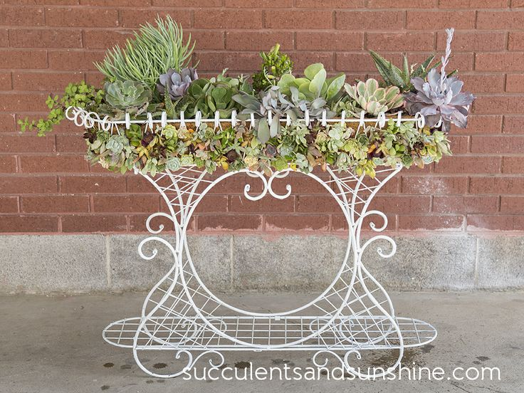 White wire planter filled with succulents - Succulents and Sunshine