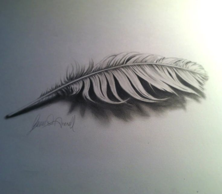 Drawing a 3D Feather,  want to learn it
