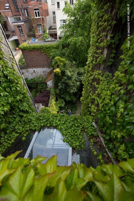 De meeste mensen staan weigerachtig staan tegenover klimplanten. Maar aangezien ze vocht aan de muren onttrekken, is hun aanwezigheid net een teken dat de woning gezond is.