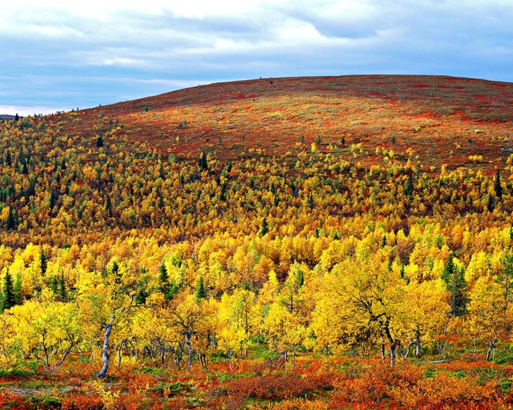 Colours of Autumn in Finnish Lapland, by Lapland Safaris