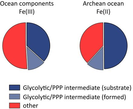Non‐enzymatic glycolysis and pentose phosphate pathway‐like reactions in a plausible Archean ocean | MSB