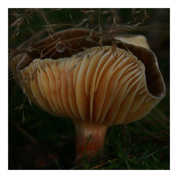 fungi. /// karolina-g