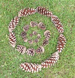 Land Art for Kids: How To Do Land Art
