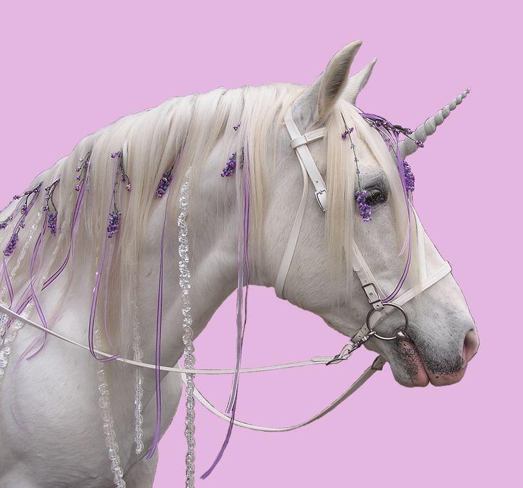 Unicorns And Fairies Real unicorn - Google Searc...