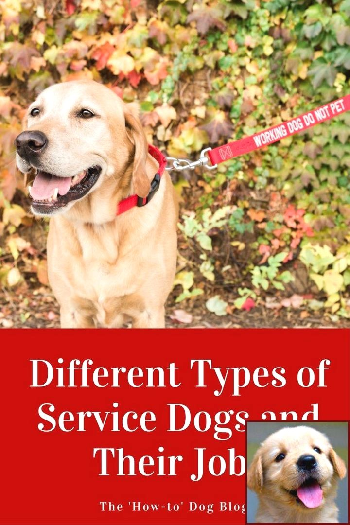 House Training A Puppy Uk And Clicker Training Dogs To Stay