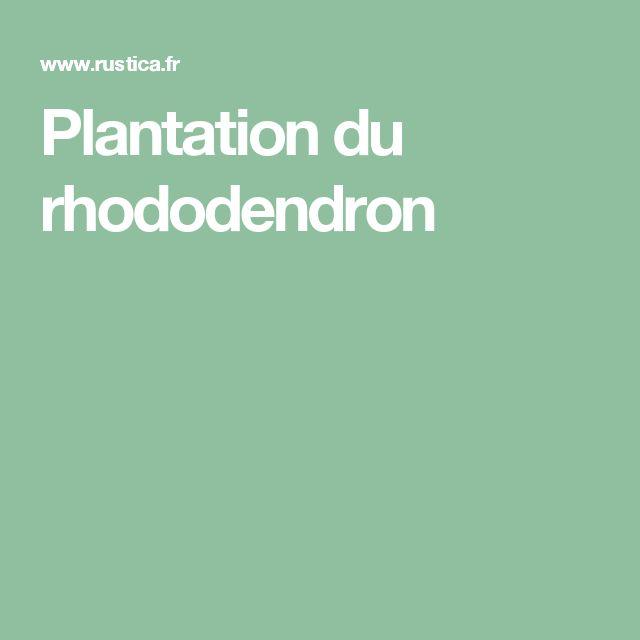 Les 25 Meilleures Idées De La Catégorie Plantation Rhododendron
