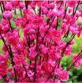 Nova flor de pessegueiro flores de seda Artificial ramos de pêssego enfeite de natal buquê de casamento Centerpieces decorações suprimentos