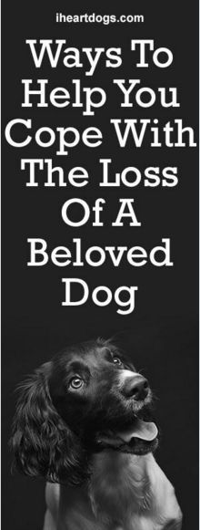 Ways To Help You Cope With The Loss Of A Beloved Dog