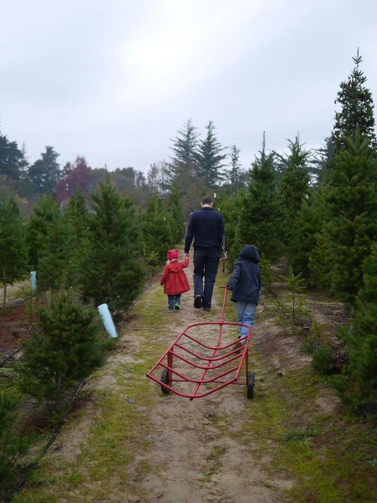 Choosing a Christmas tree from a Christmas tree farm