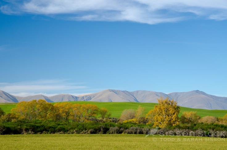 Close up of Central Otago landscape image of green paddocks autumn trees classic central otago hills and a interesting clouds in a blue sky. Taken near Naseby looking towards Kyeburn hills.