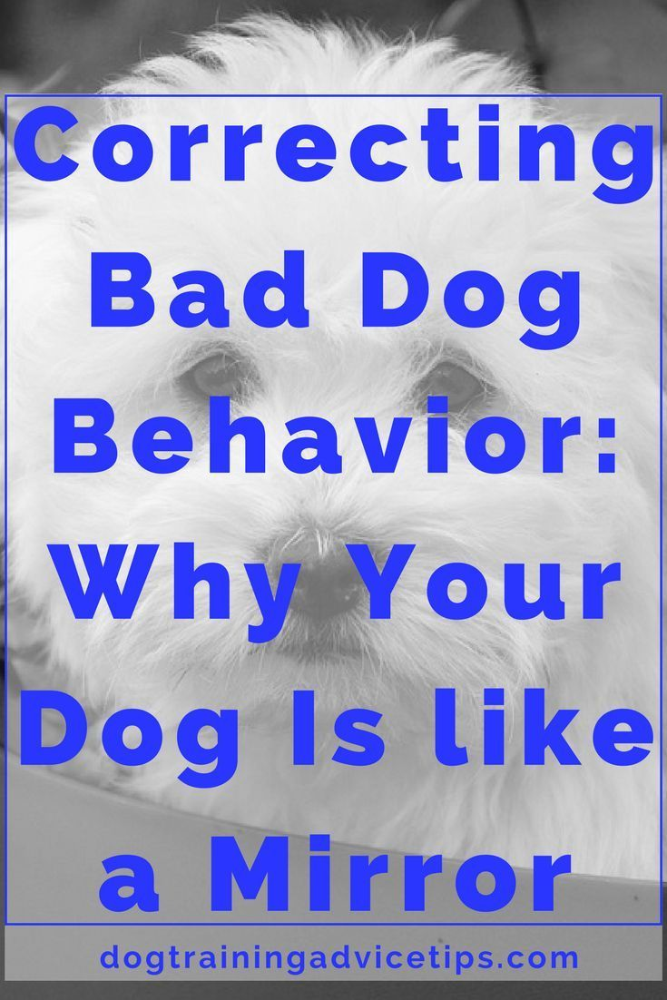 Correcting Bad Dog Behavior: Why Your Dog Is like a Mirror | Dog Training Tips | Dog Obedience Training | Dog Training Commands | http://www.dogtrainingadvicetips.com/correcting-bad-dog-behavior-dog-like-mirror Online Dog Training – Expert Videos To Stop Dog Behavioral Problems! | http://qoo.by/2mMb #DogObedienceTipsandAdvice