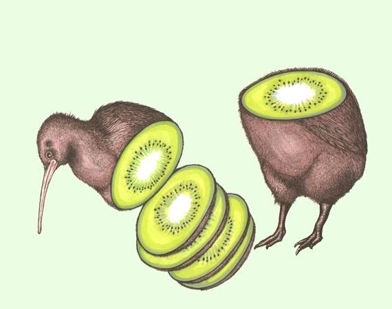 Kiwi Fruit Bird   www.pixshark.com - Images Galleries With ...