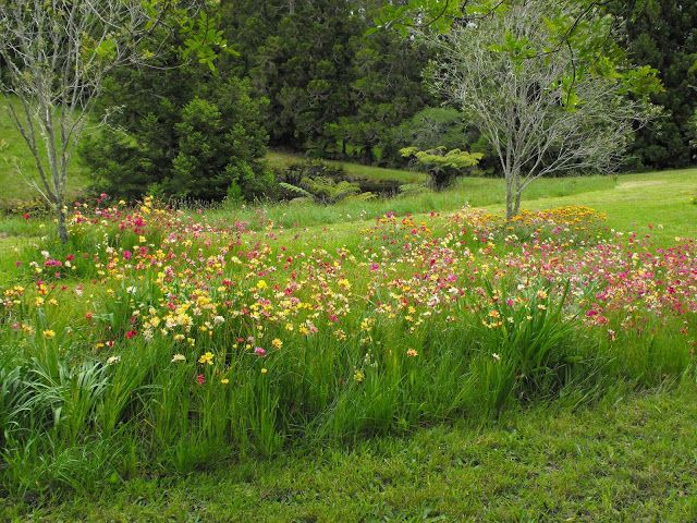 Wildflower garden in New Zealand