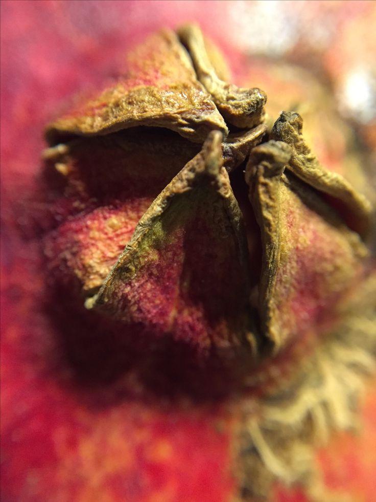 Pomegranate, macrophoto