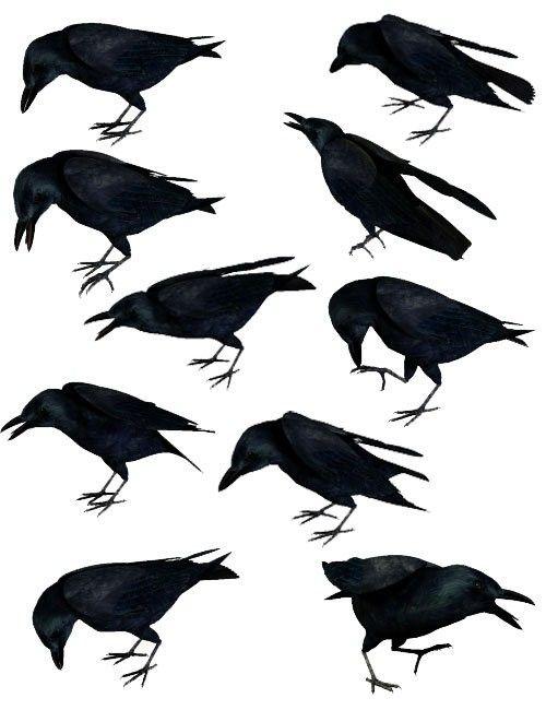 Noggin's Poser Crows